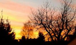 Arbre de coucher du soleil images stock