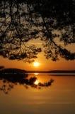 Arbre de coucher du soleil Photographie stock