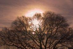 Arbre de coucher du soleil photos stock