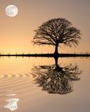 arbre de coucher du soleil de chêne Photographie stock libre de droits