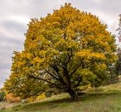 Arbre de couleur d'automne Photographie stock