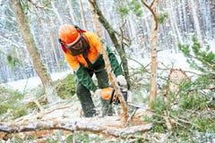 Arbre de coupe de bûcheron dans la forêt d'hiver de neige photo stock