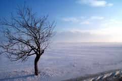 Arbre de crabe sur une tempête de l'hiver Image stock