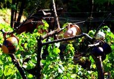 Arbre de cruche tradition folklorique des essais de lait d'argile accrochés sur les arbres secs image stock