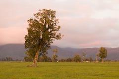 Arbre de début de la matinée sur des terres cultivables en verre vert photo libre de droits