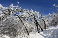 Arbre de dépliement de neige images libres de droits
