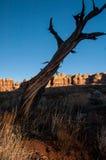 Arbre de désert Photos stock