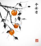 arbre de Date-prune avec les fruits oranges sur le fond blanc illustration libre de droits