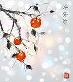 arbre de Date-prune avec les fruits oranges sur le fond rougeoyant blanc illustration stock
