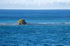 Arbre de divi de Divi - coriaria de Libidibia - inondé sur le banc de sable, Aruba Image libre de droits