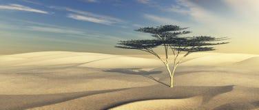 arbre de dunes de désert d'acacia Photo stock