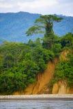 arbre de falaise image libre de droits