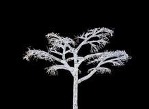 arbre de fantom Photos libres de droits