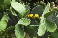 branche de poire avec des fleurs et des bourgeons photo stock image 71456550. Black Bedroom Furniture Sets. Home Design Ideas