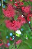 Arbre de fleur Image stock