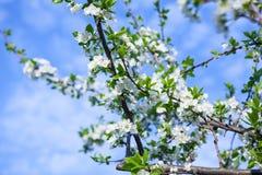 Arbre de fleur au-dessus de fond de nature Image libre de droits