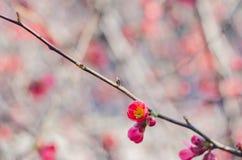 Arbre de fleur au-dessus de fond de nature Juste plu en fonction Fond de source Images libres de droits