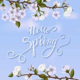 Arbre de fleur et lettrage de ressort Photo stock