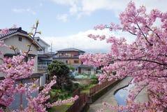 Arbre de fleurs de cerisier ou Sakura et rivière photos stock