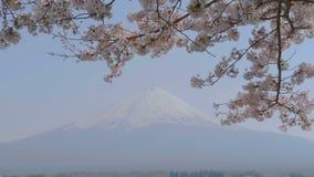 Arbre de fleurs de cerisier soufflant dans le vent et le Mt Fuji, Japon banque de vidéos