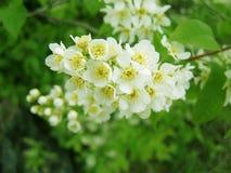 Arbre de floraison Photo libre de droits