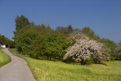 arbre de floraison Image stock