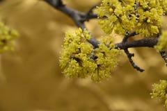 arbre de floraison Images libres de droits