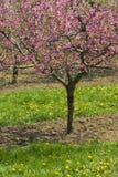arbre de floraison dans le jardin photo libre de droits