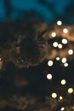 Arbre de floraison dans les lumières des guirlandes Photographie stock libre de droits