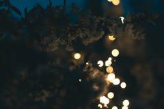 Arbre de floraison dans les lumières des guirlandes Image stock