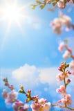 Arbre de floraison de ressort d'Art Beautiful Photographie stock libre de droits