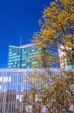 Arbre de floraison et bâtiments modernes Photographie stock libre de droits