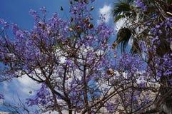 Arbre de floraison pourpre stupéfiant photo libre de droits