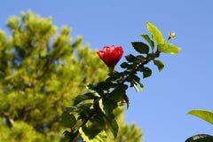 Arbre de floraison sur le fond de ciel Photos libres de droits
