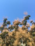 Arbre de fumée avec le ciel bleu Photo stock