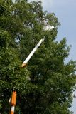 Arbre de garniture d'arboriste Photo stock