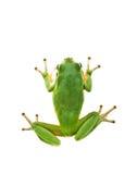 arbre de grenouille images libres de droits