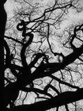 Arbre de hêtre en hiver photographie stock libre de droits