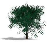 arbre de jardin illustration de vecteur