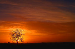 Arbre de légère brûlure au coucher du soleil Images libres de droits