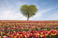 Arbre de l'amour au printemps Arbre en forme de coeur contre le ciel bleu Bel horizontal avec des fleurs Fond d'amour Images libres de droits
