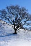 Arbre de l'hiver photo stock