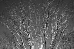 Arbre de l'hiver Photographie stock libre de droits