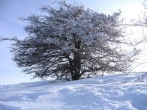 Arbre de l'hiver Photos libres de droits
