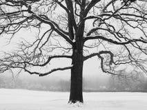 Arbre de l'hiver Photos stock