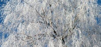 Arbre de l'hiver Image stock