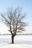 Arbre de l'hiver Images stock