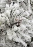 Arbre de l'hiver Photographie stock