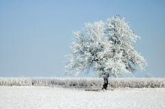 Arbre de l'hiver image libre de droits