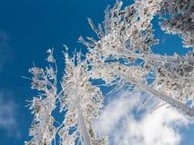 Arbre de l'hiver avec le ciel bleu Images stock